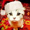 meredith christmas