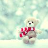bear & snow