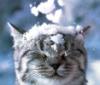 Котенок и снег