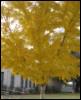 tree, nature, autumn