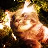 Kitty-XmasTree2