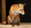 being_fox.livejournal.com