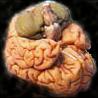 brainface