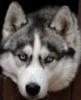 husky56 userpic