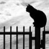 depressia userpic