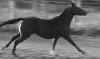 iselima: Running Horse