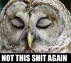 shit_owl