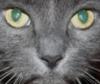 catintheweb userpic