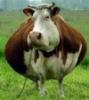 farmingnewsru userpic