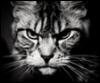 garry_samara userpic