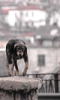 zawedi_psa