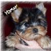 yorky_odessa userpic