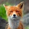 foxweb userpic