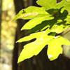 keladrii userpic