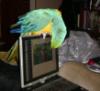 Cindy Laptop Ornament