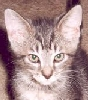 bounce_the_cat userpic
