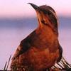 prideandprejudiceandcheese: [tp] birdy