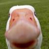 lopples userpic