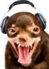 dogginista userpic
