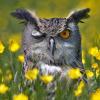 paranoiya owl