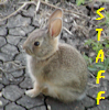 bunny - staff (text right)