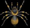 spiderlog
