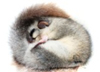 alton_lust: dormouse