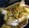 an_cat userpic