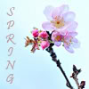 flower: spring blossom