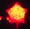 pichiruchi: red star