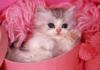 ccheri userpic