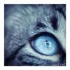 arintuilinde userpic