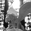 wingsofwelkin userpic