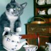 every Starbucks should have a polar bear: Timepunching: kitty tea