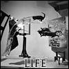 Life - Dali
