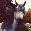 Coeur d'Coeurs Equestrian