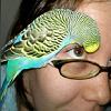 coyotelin userpic