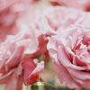 splendouremains userpic