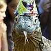 birthday komodo