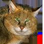 BigAngryCat, Cat