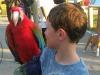 d parrot