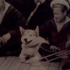 Императорская Собака-улыбака