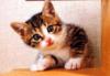 matsumiyamoto userpic
