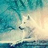 Kristin: Winter » Snowy Wolf