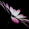 ahhh_zut userpic