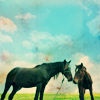 [omg] two horsies   where heather grows