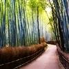 Seery: bamboo