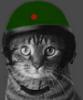 Кот в каске