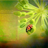 Sonya: lady bug in a sea of green