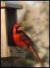 readbird userpic